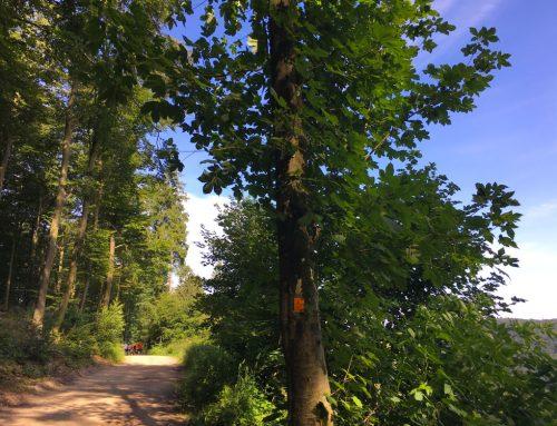 Wanderurlaub im Bergischen Land