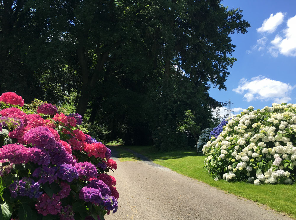 Blumenfreuden am Wegesrand