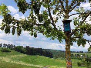 Vogelhaus bei Wollmerath