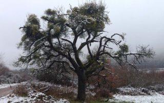 Ein Hauch von Schnee
