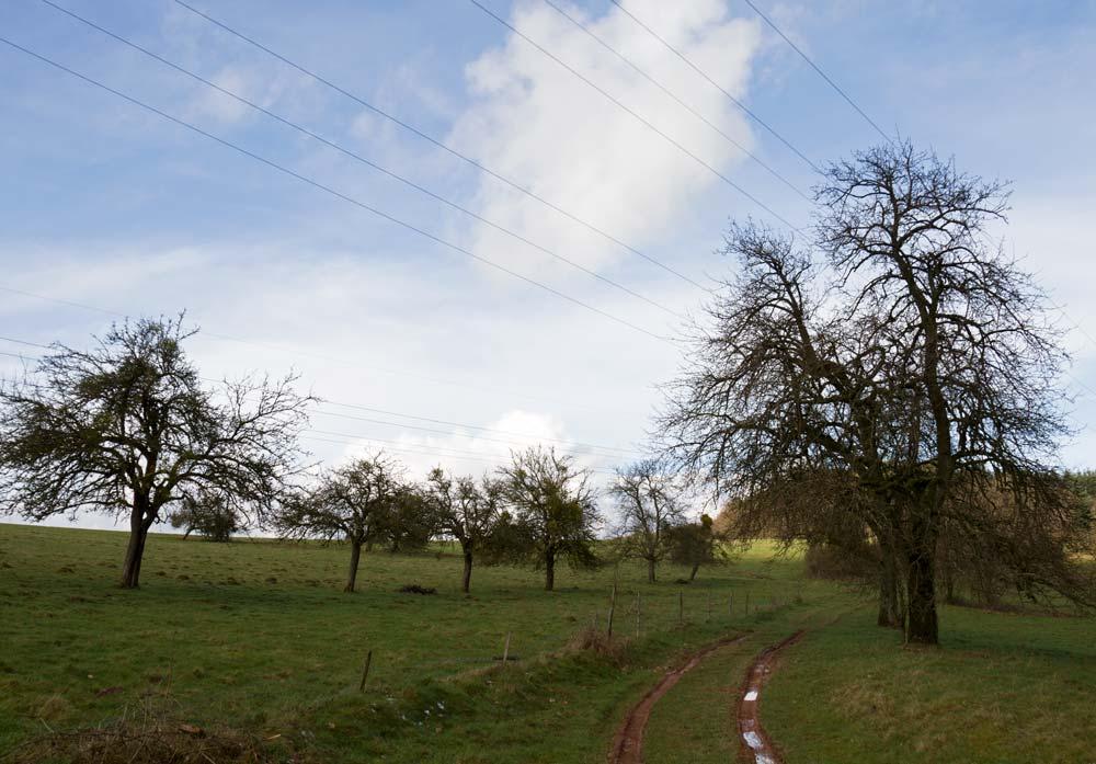 Mehringer Wald