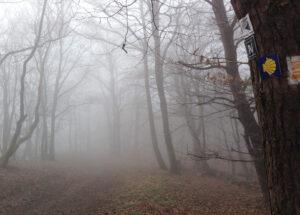 Weg ins Nebeldickicht