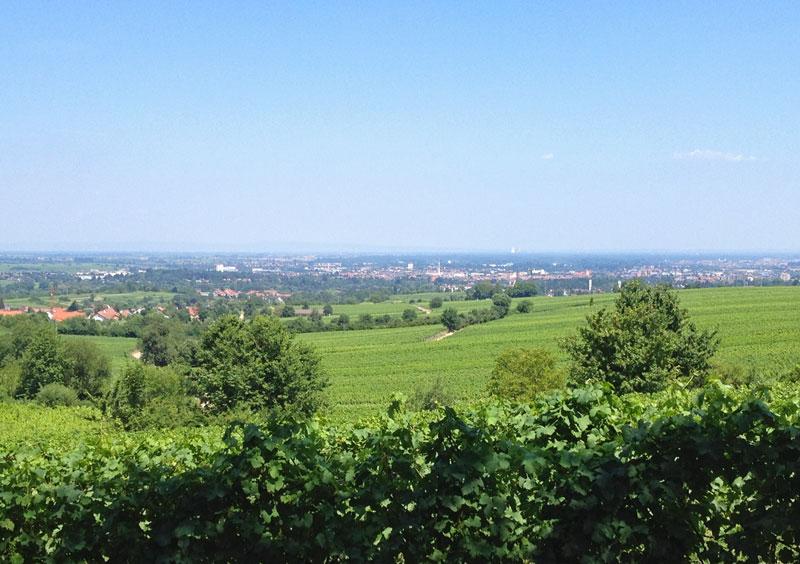 Blick von der kalkig Richtung Rhein