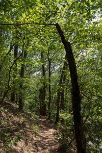 Kastanienwald
