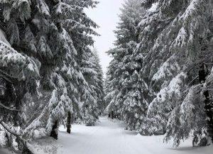 Wanderung durch Märchenwald