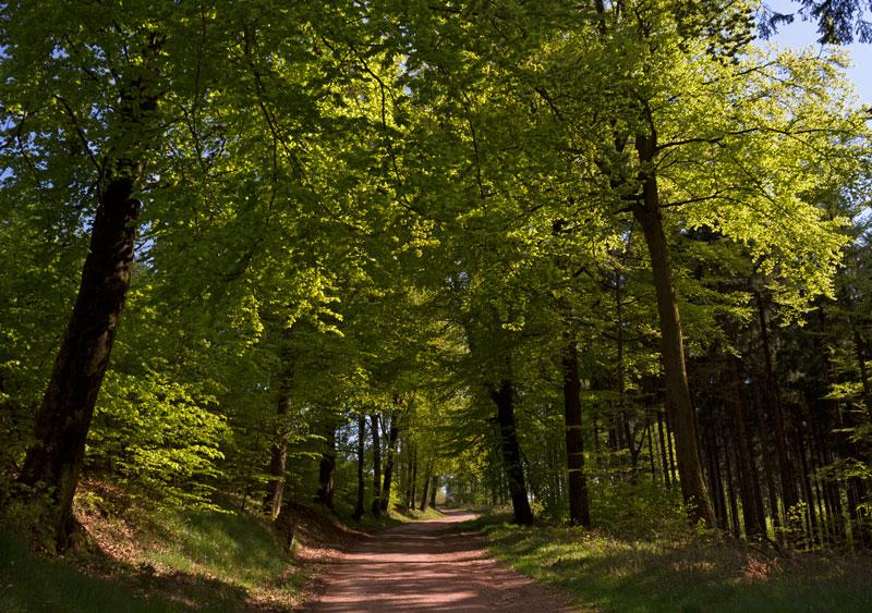 Waldweg auf dem Rennsteig