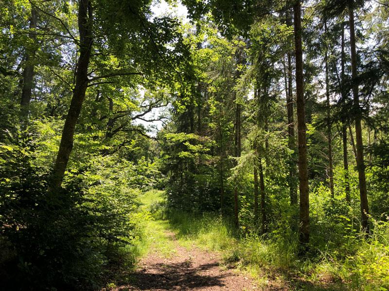 Stille des Waldes